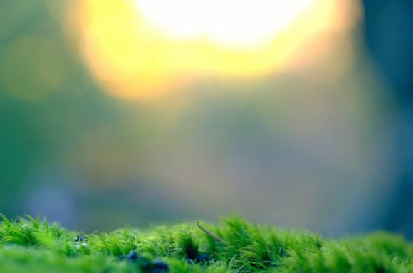 Ekologiczne powitanie wiosny