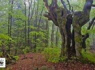 Parki narodowe ratują nasze zdrowie i … portfele